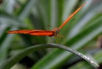 Maart 2012 - Hortus Botanicus