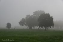 Oktober 2019 - Mist